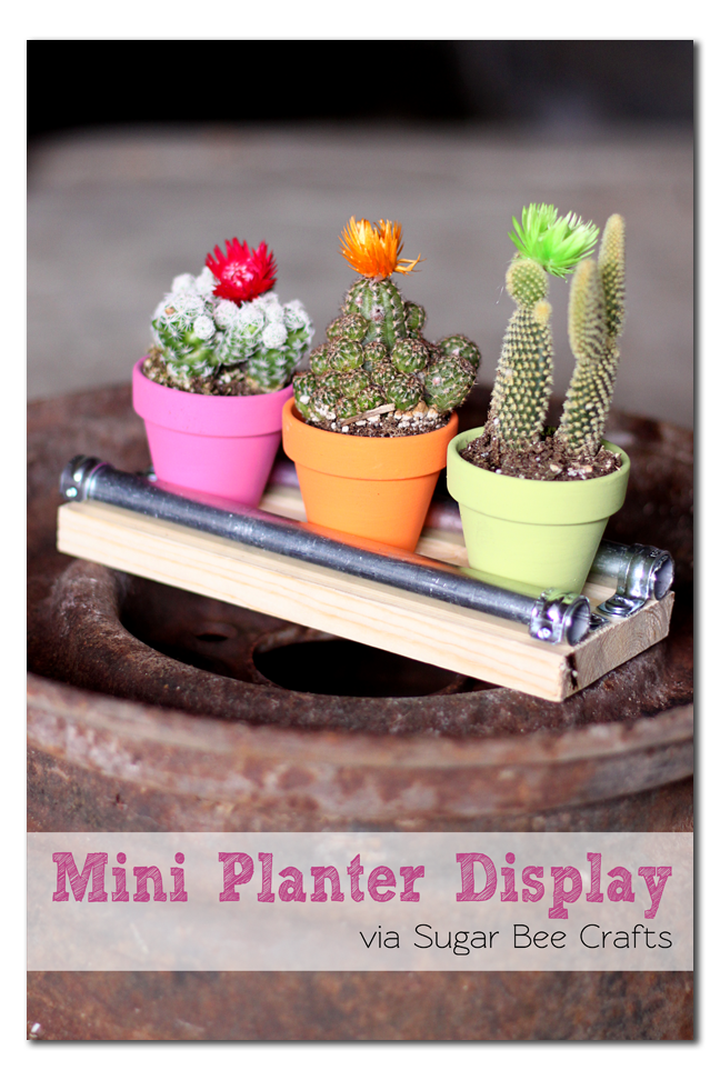 mini planter cactus display board