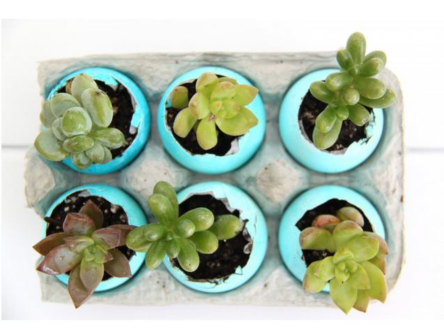 succlent eggshell planter