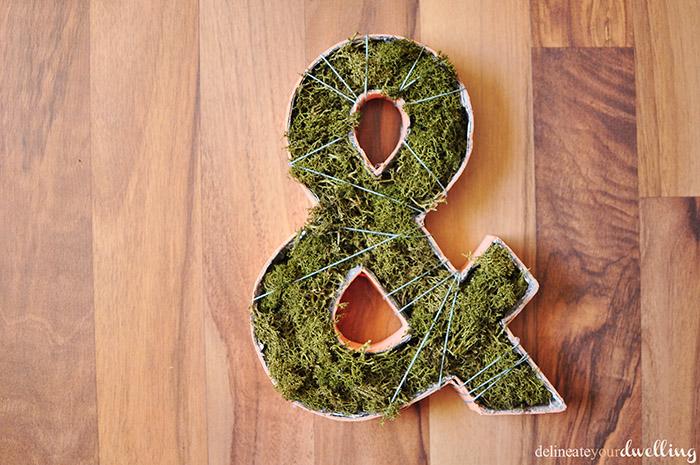 9-Plant-Ampersand